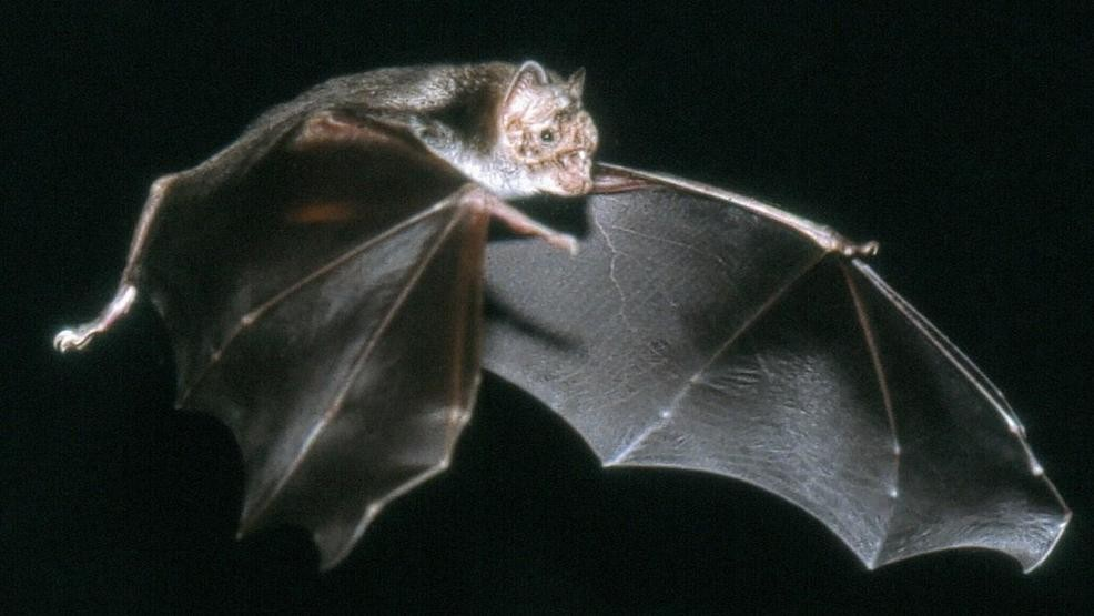 Luzerne County man in recovery after rabid bat attacks him